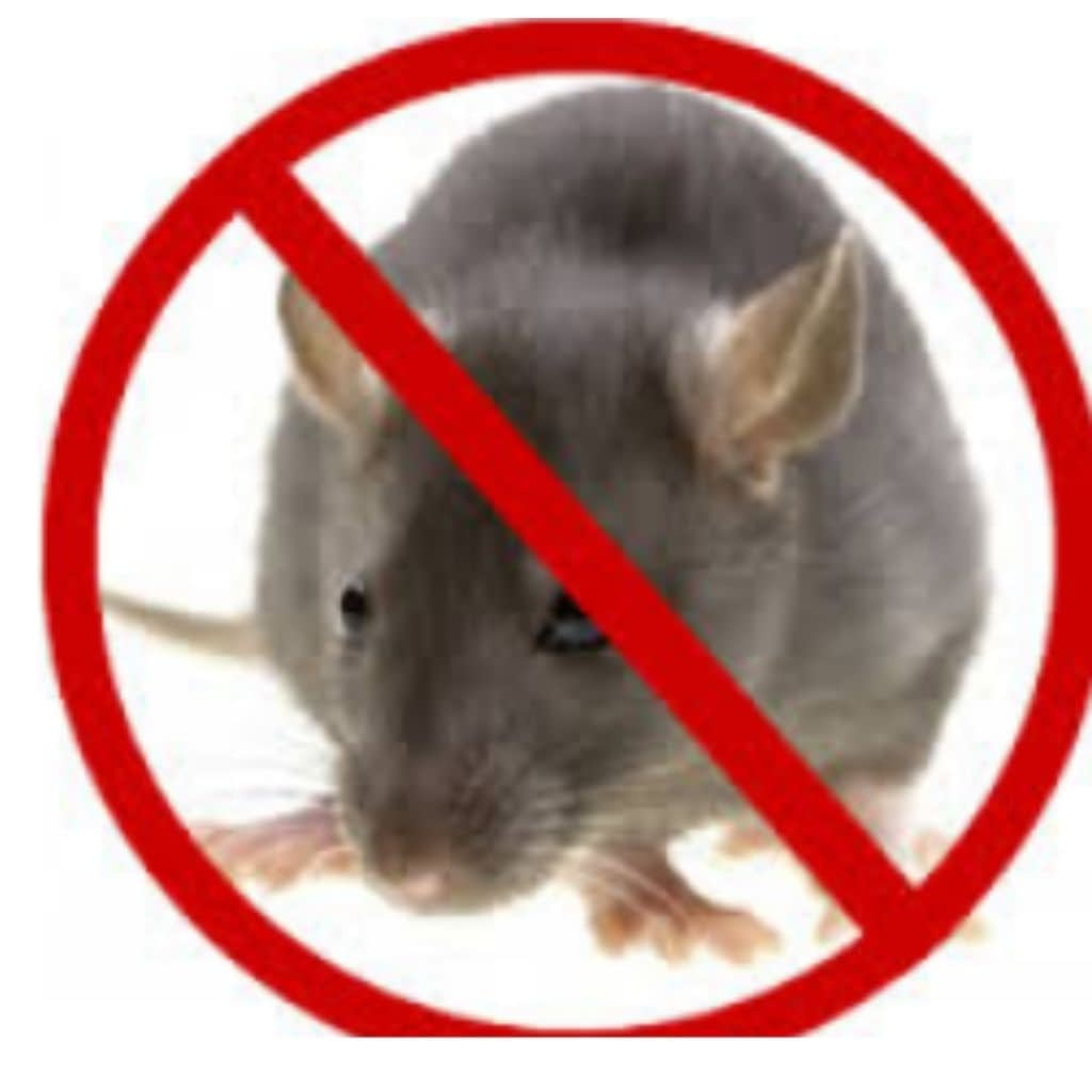 Rodent pest control in pune