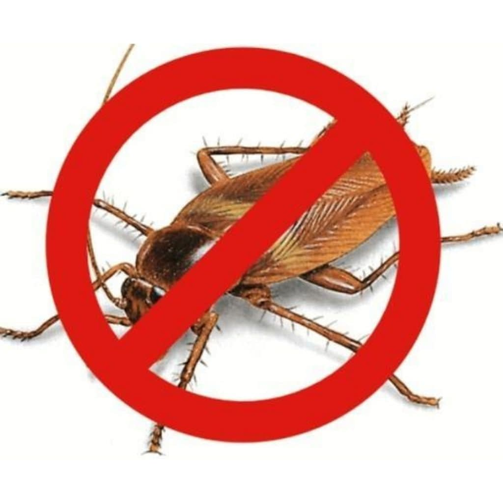 Cockroach Pest control in pune