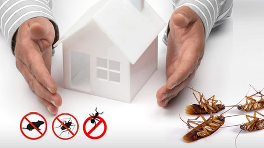 Clean Up pest control