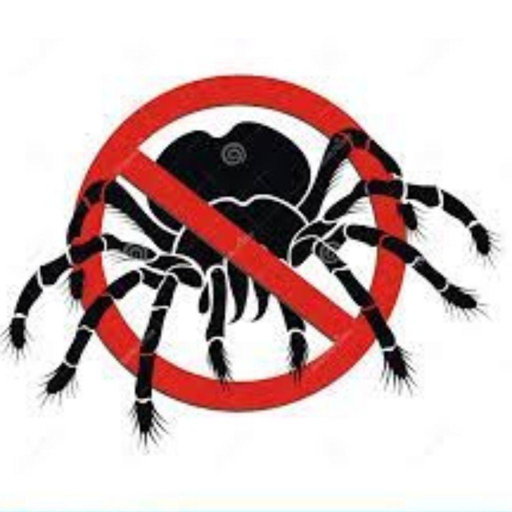 Lizard, Spider, pest control in pune